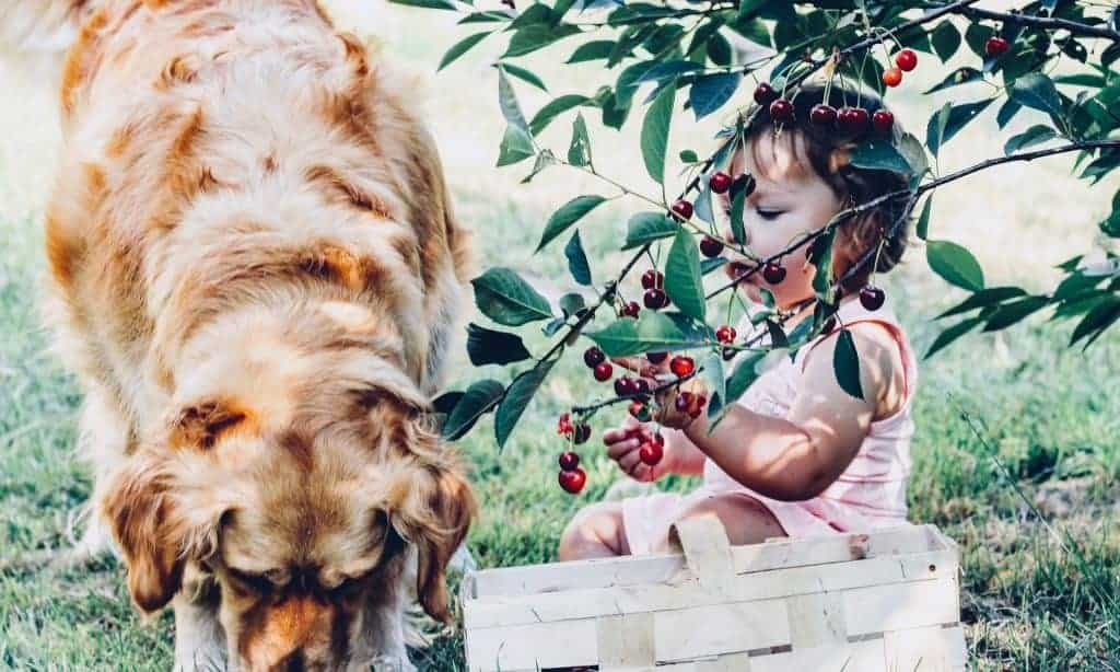 Child eating outdoors with dog